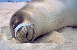 seal-plastic-ring