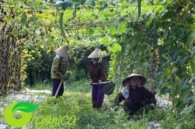 Organica people