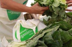 Mercado organico 1